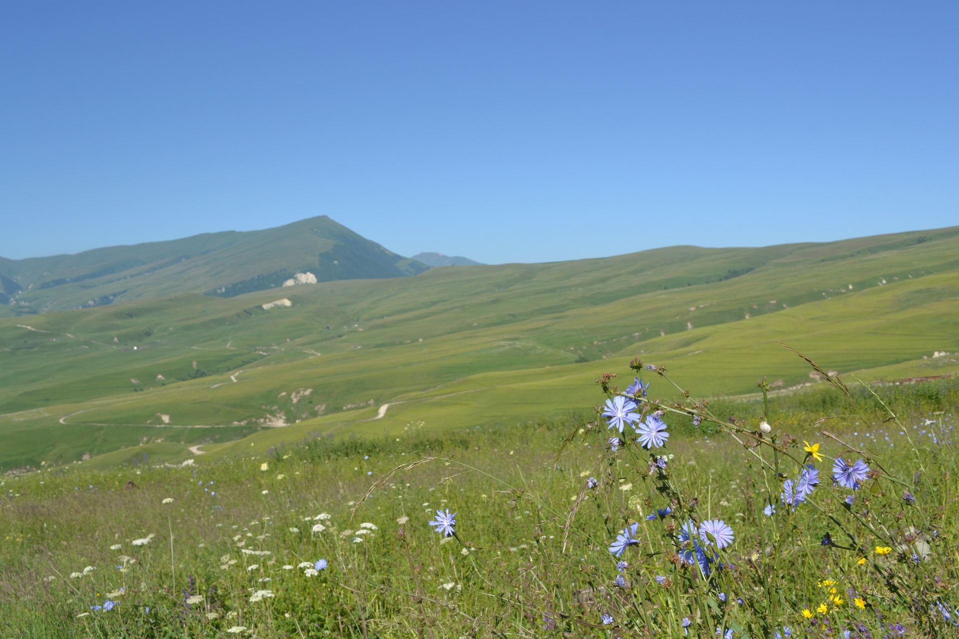 цветочные луга, чечня, горы кавказа