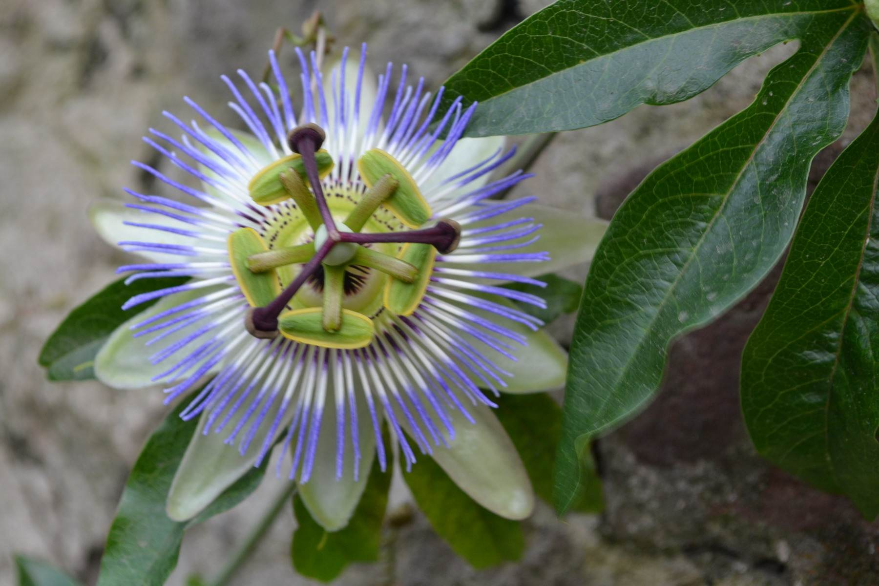 необычные цветы, грузия