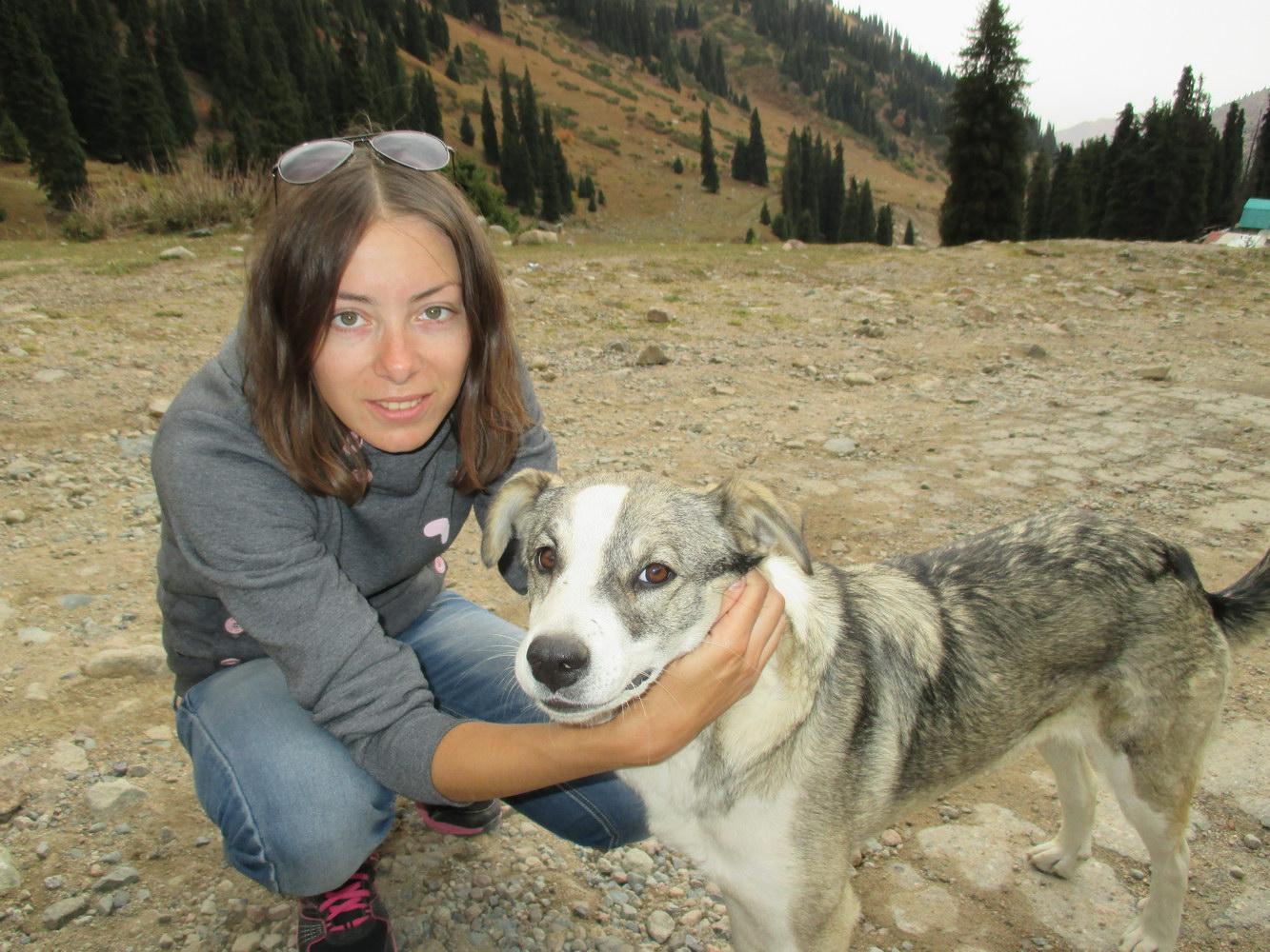 собака барабака. горы алатау. казахстан