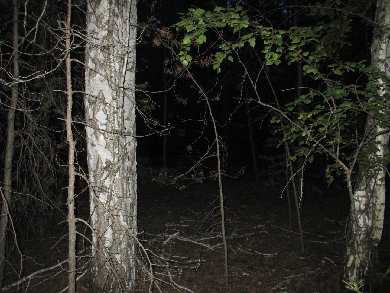 тёмный лес. путешествие автостопом через сибирь, природа