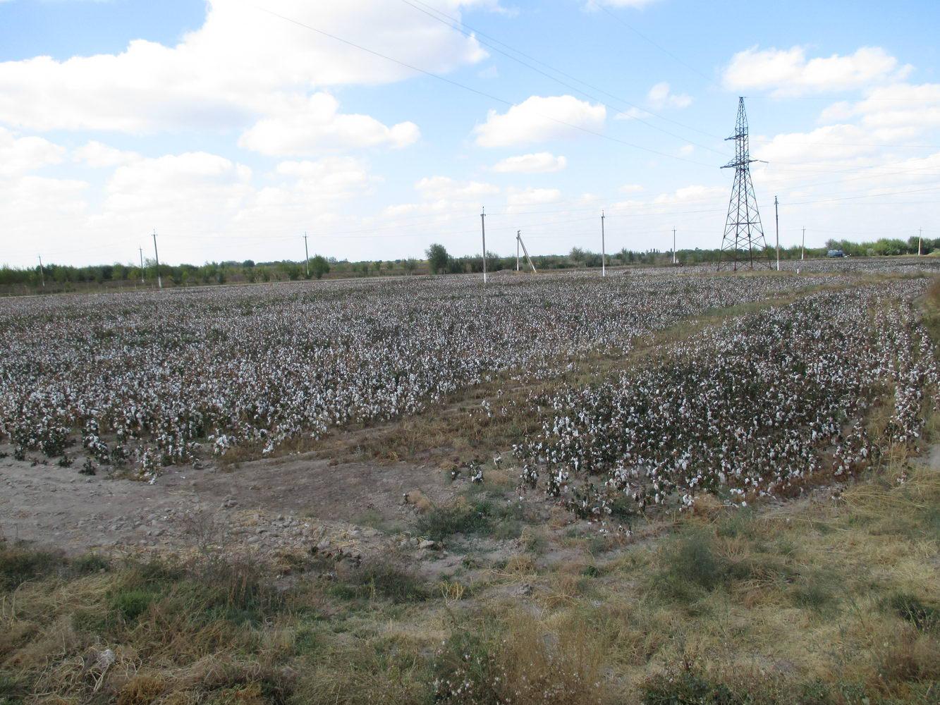 хлопковое поле. путь из узбекистана в казахстан автостопом