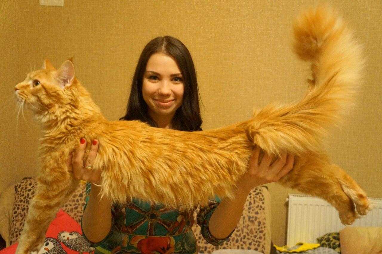мэйкун - гигантский кот людоед и саша. автостопом в украину