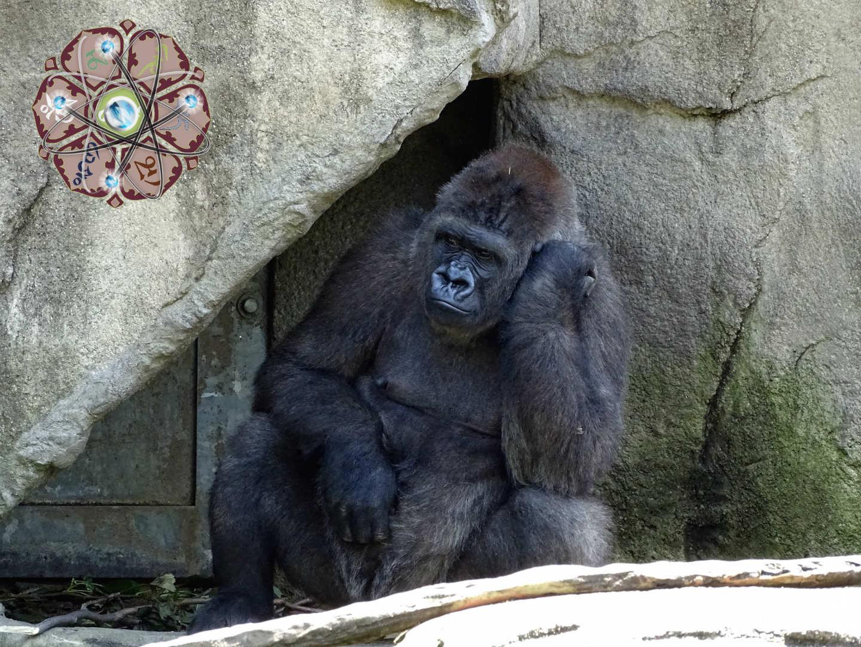 обезьяна думает о том, что означают слова: знание - сила? в чём превосходство одних людей над другими?