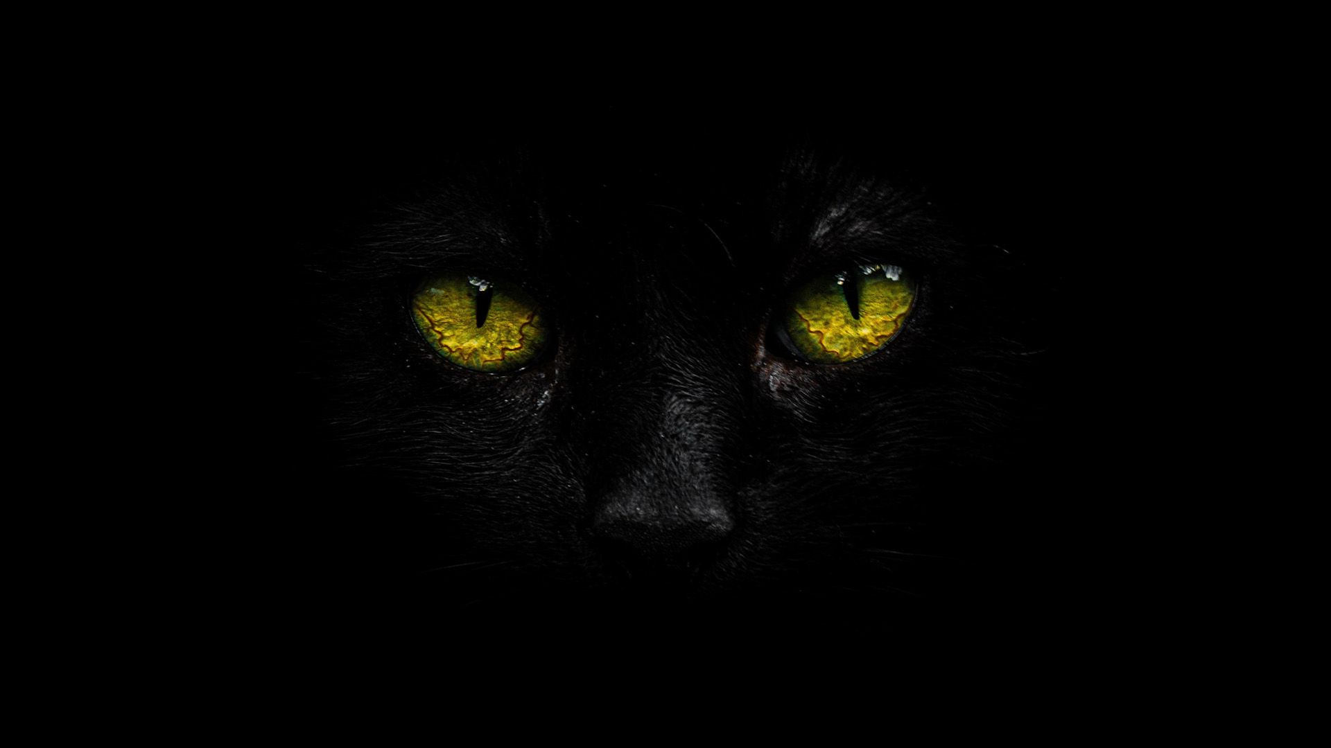 чёрная кошка. призыв демона во сне
